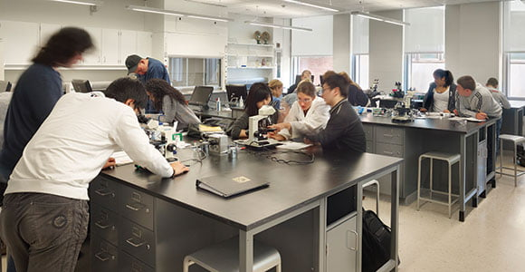 Education Requirements for Biomedical Engineering